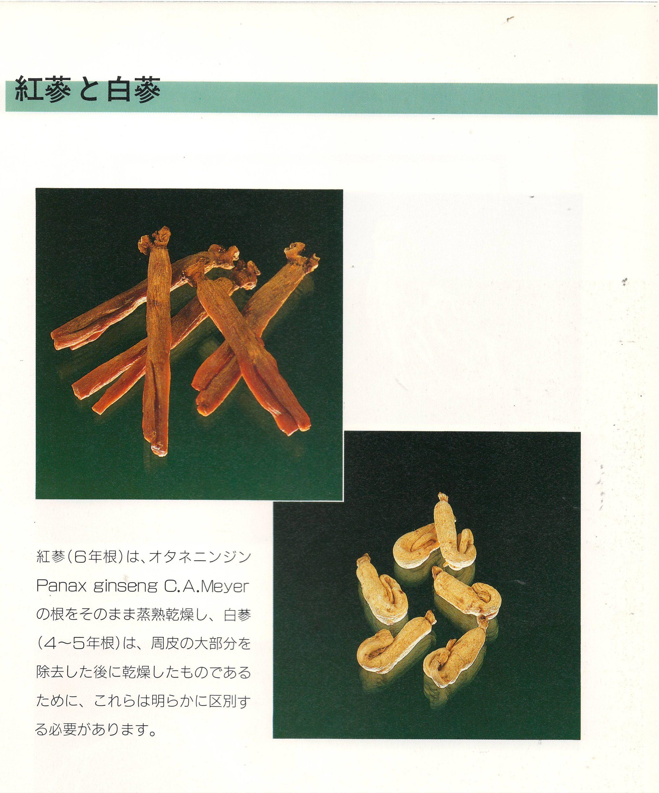 紅参と白参